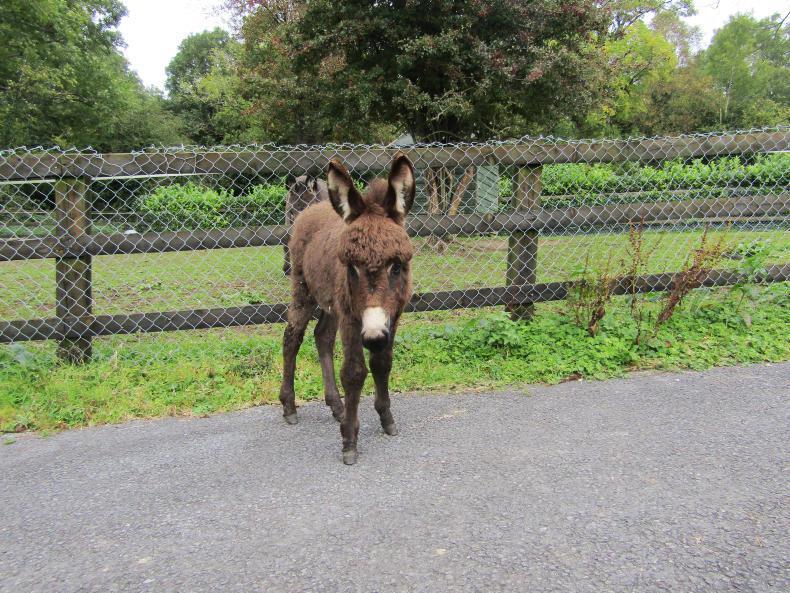Three equines seized at Ballinasloe
