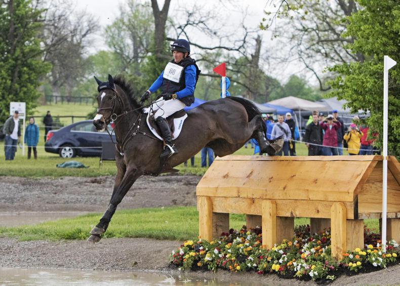 Irish Sport Horse studbook wins again