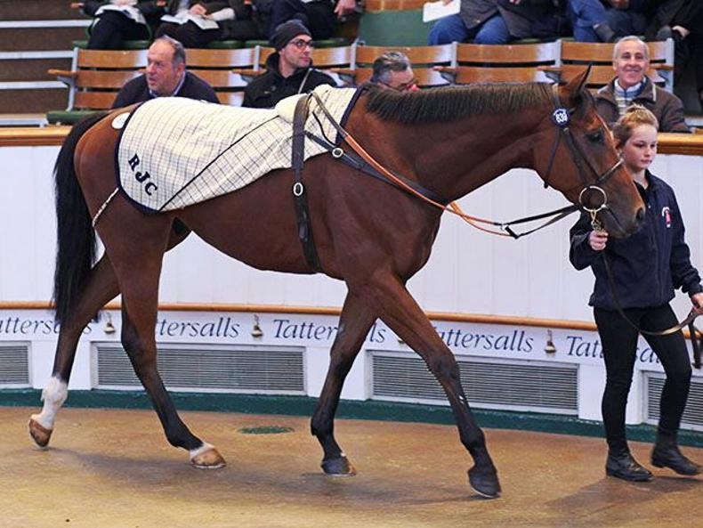 Qatar's leading trainer secures Cloudberry