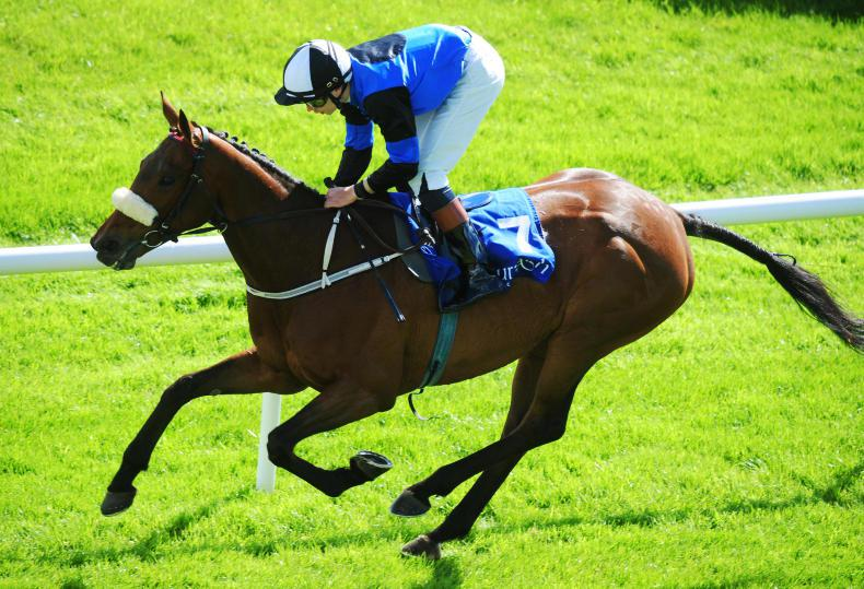LEOPARDSTOWN SATURDAY: Cradle has a Mountain to climb
