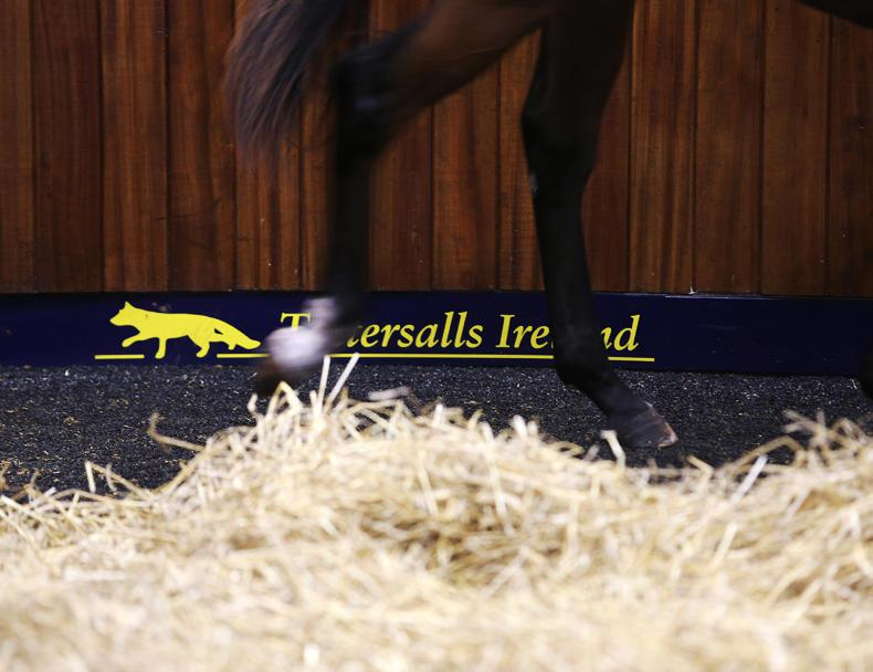 €70,000 Robin Des Champs colt tops penultimate day of foals
