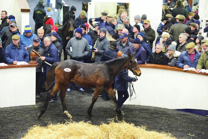 €55,000 Flemensfirth colt tops final day of strong foal trade