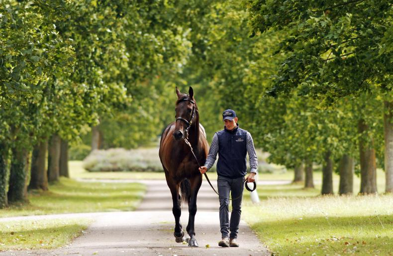 BREEDING BRIEFS: Stallion fee news from the November 12th issue