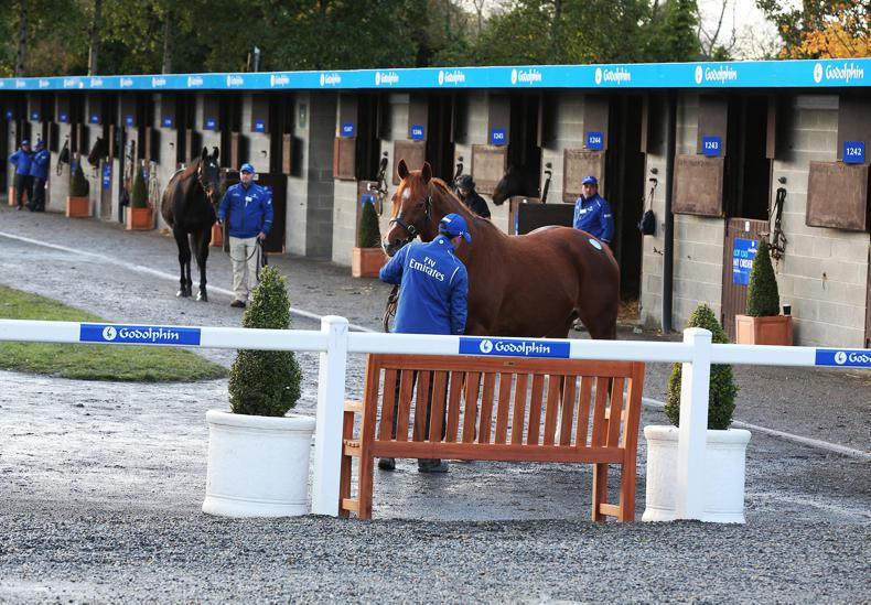 GOFFS NOVEMBER FOAL SALE: What they said