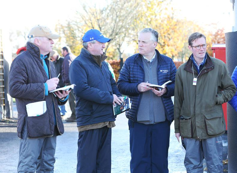 GOFFS NOVEMBER FOAL SALE:  Challenging times in the foal market