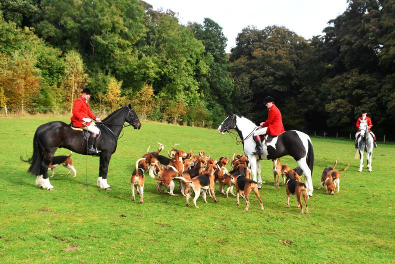 Woodland music: The Louth Foxhounds
