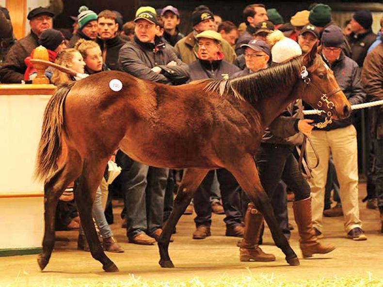 VIDEO: Kodiac and Toronado colts share Tattersalls Foal Sale honours