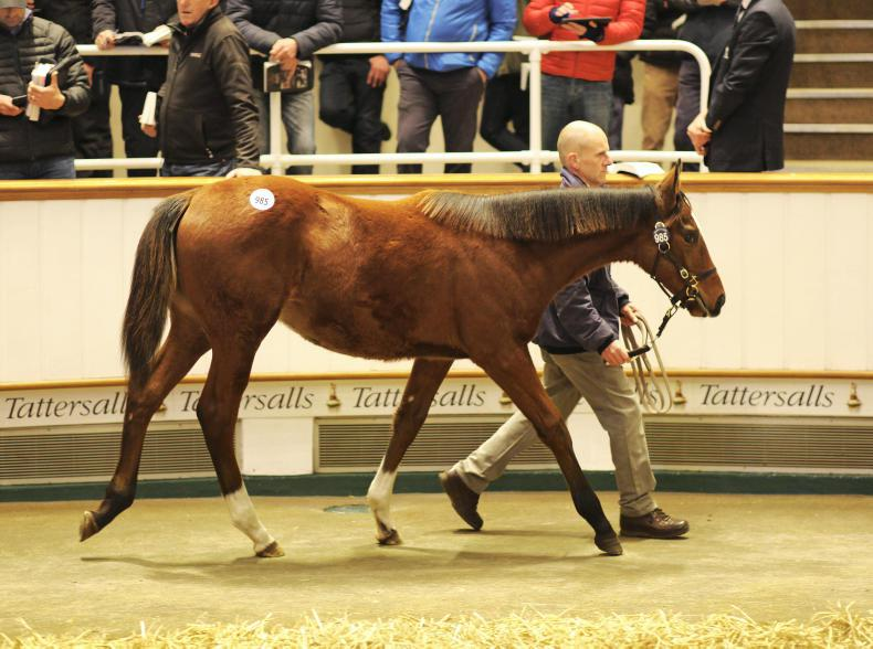 Dansili filly tops trade on busy Friday session