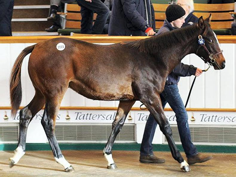 VIDEO: 110,000gns Showcasing colt tops final day of Tattersalls Foal Sale