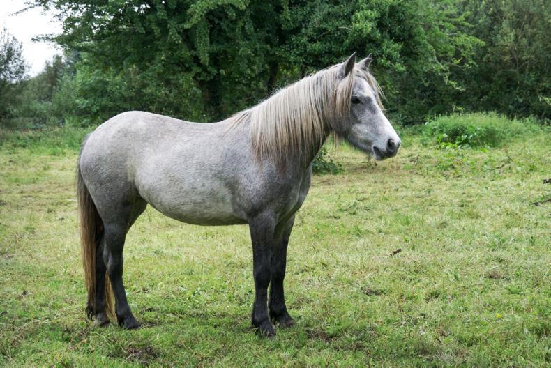 NEWS:  Over 80% of seized horses euthanised