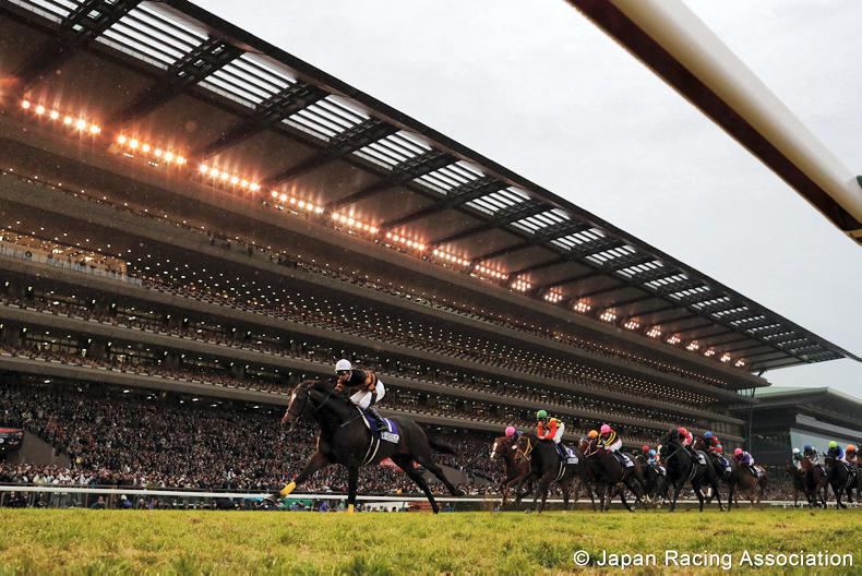 Japan Cup winner is major boost for sire
