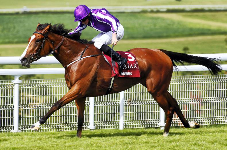 Minding named Horse of the Year