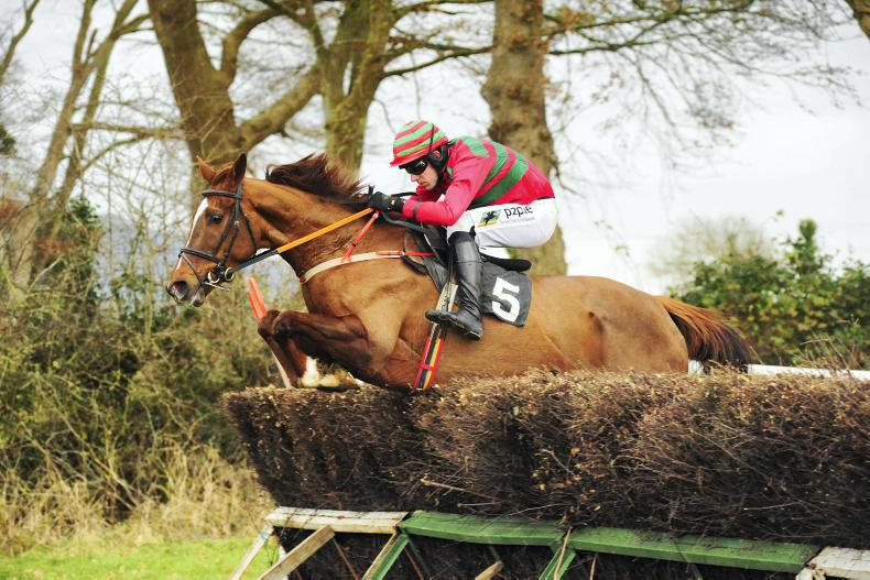 LISRONAGH SUNDAY TIPPERARY FOXHOUNDS: Maple makes it all worthwhile