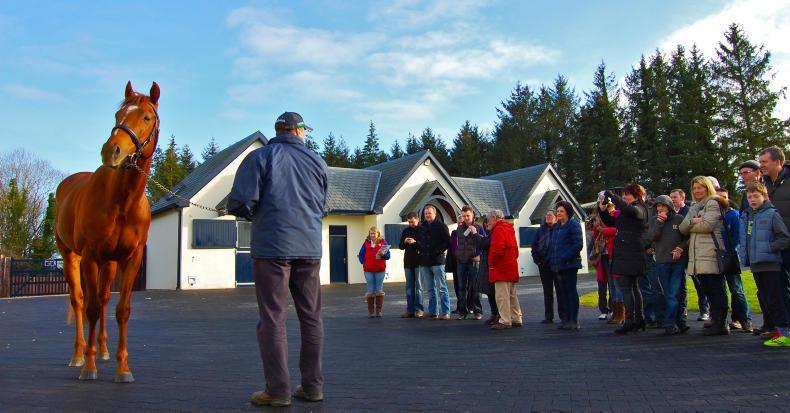 Irish Stallion Trail will go ahead in January