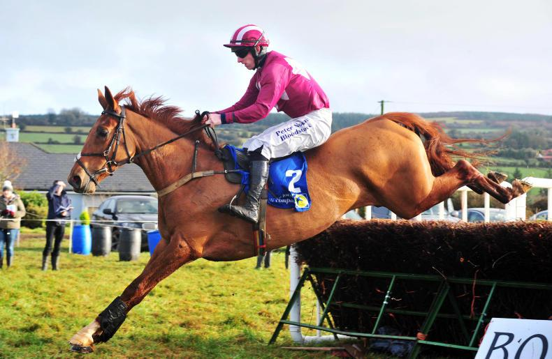 BREEDING ANALYSIS: Lady Lavery has classy conections