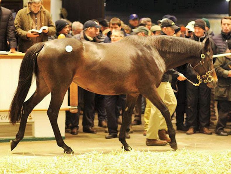 REVIEW OF 2016 BLOODSTOCK: Demand in foal lower market well below supply