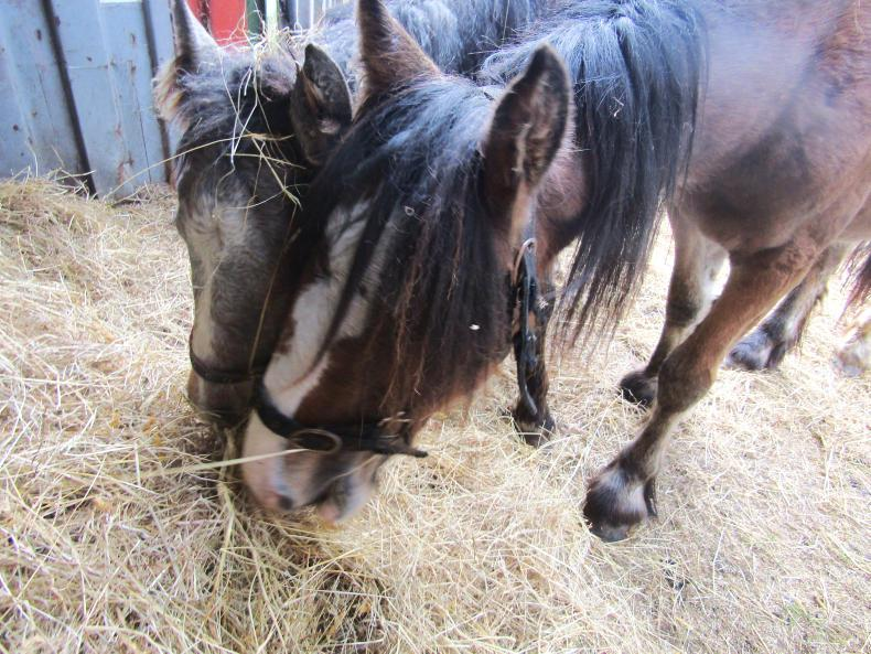 REVIEW 2016: Equine welfare is still an issue