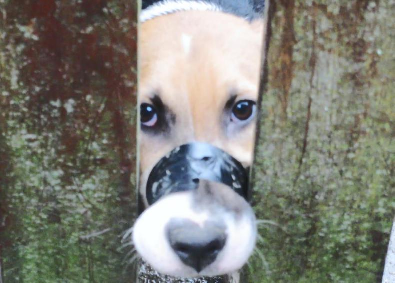 NEWS:  Woman who taped dog's mouth up fined