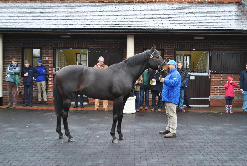 Slade Power : Standing at Kildangan Stud