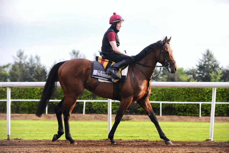 The Gurkha : Standing at Coolmore Stud