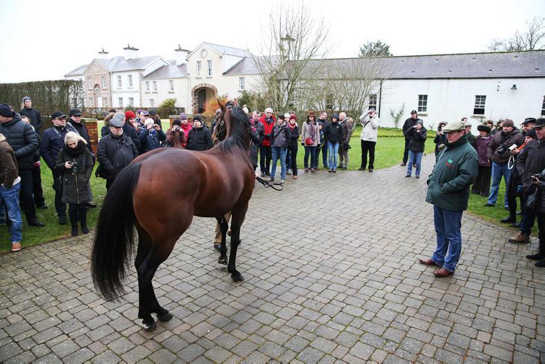 VIDEO: ITM Irish Stallion Trail fast approaching