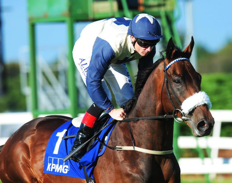 FASCINATING ROCK : Standing at Ballylinch Stud