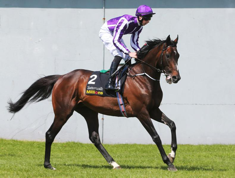 CAMELOT : Standing at Coolmore Stud