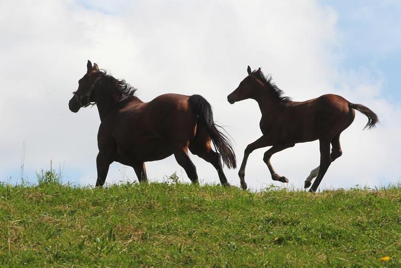 Breeder seeks help for Supreme Court test on Foal Levy