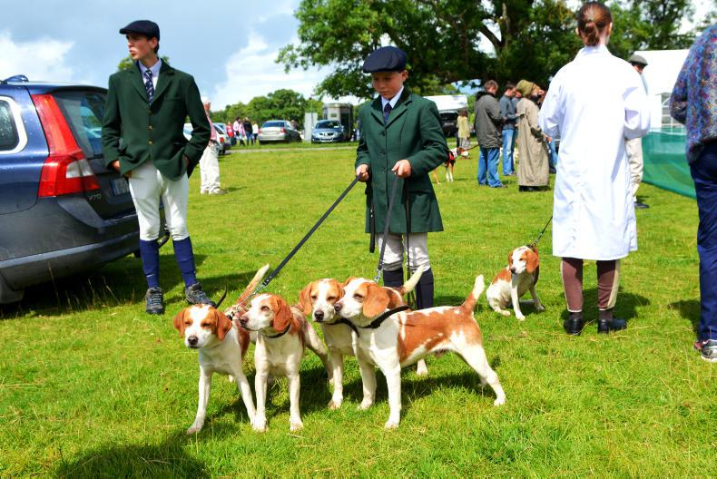 NICK NUGENT: Can't beat the Beagles