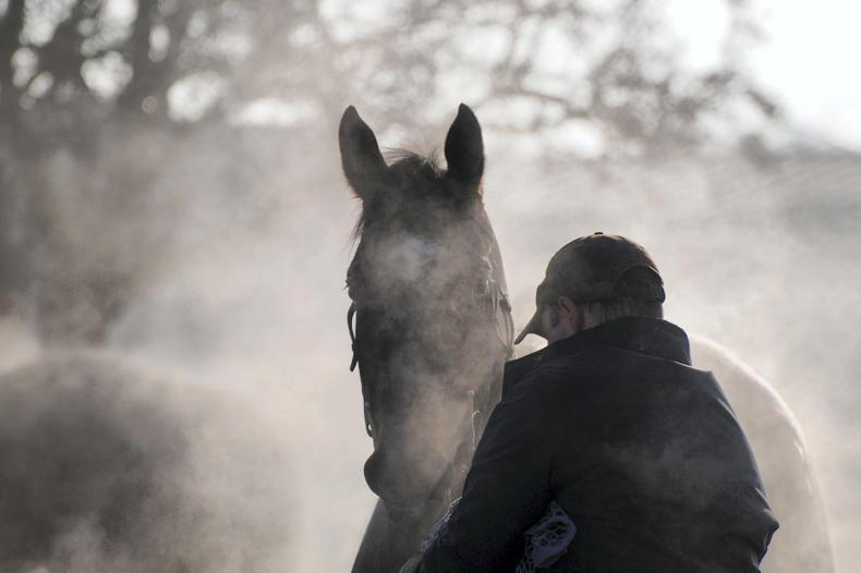 HORSE SENSE TRANSPORT: Insurance hikes 'crucifying' small-scale haulier