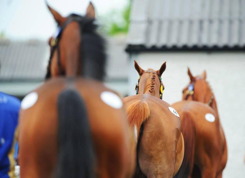 Shantou colt tops one-day Tattersalls Ireland February NH Sale