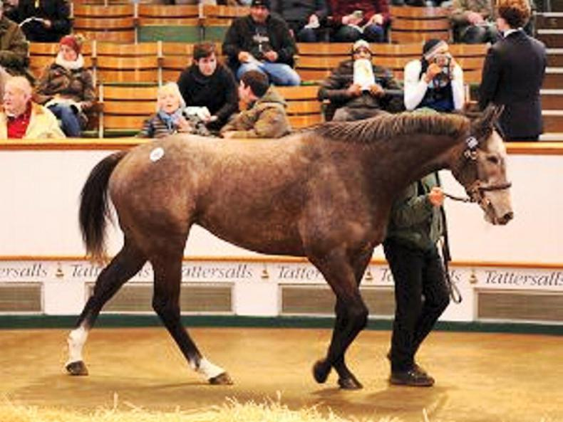 VIDEO: Mick Flanagan pays 500,000gns for Easton Angel