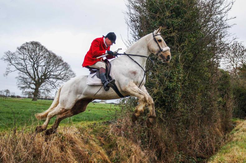 MARGIE MCLOONE: Runners and riders for Ward Union hunt race