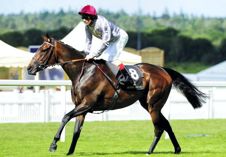 First foal for Arc heroine Treve is a colt