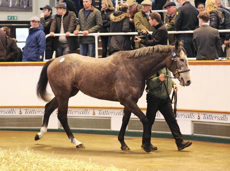 SALES: Mick Flanagan spends 500,000gns on Easton Angel