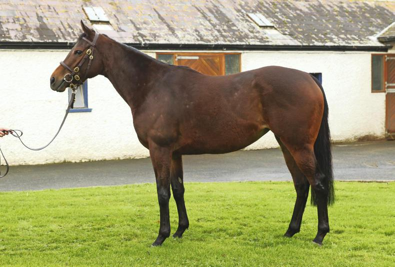 SALES: Ballymacoll Stud dispersal at Goffs