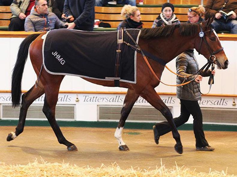 VIDEO: Records tumble at Tattersalls February Sale