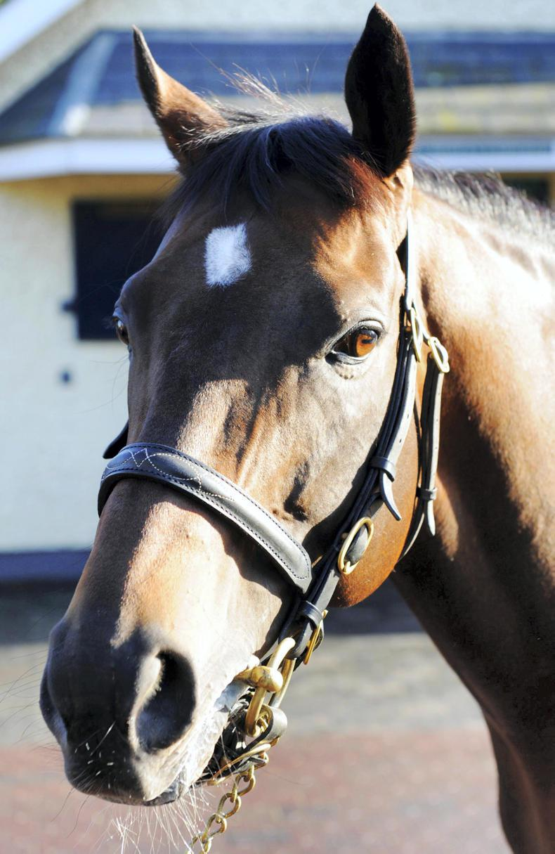 Holy Roman Emperor : Standing at Coolmore Stud