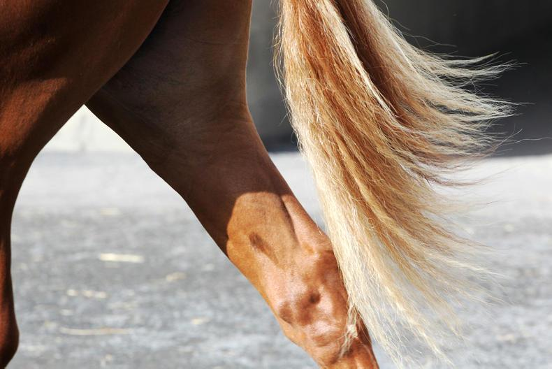 HANDS ON:  Lameness linked to health problems