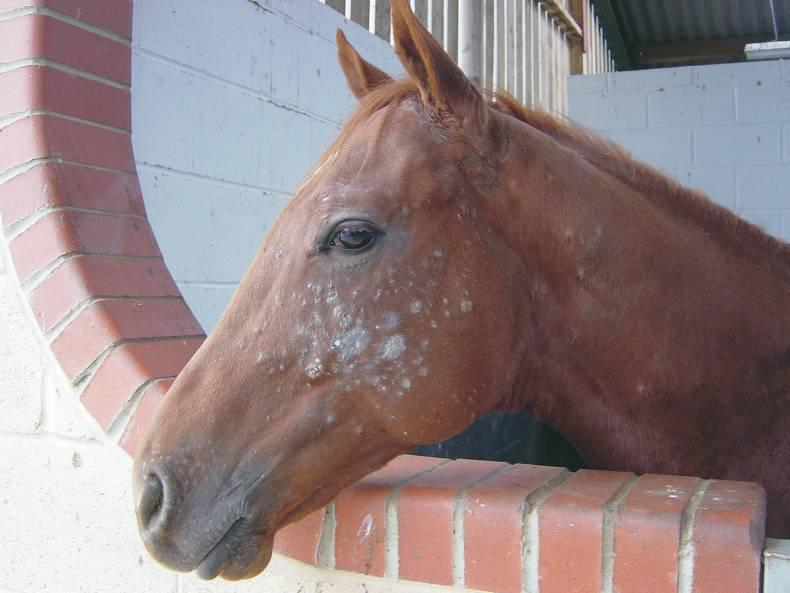 HANDS ON: Common skin diseases in horses