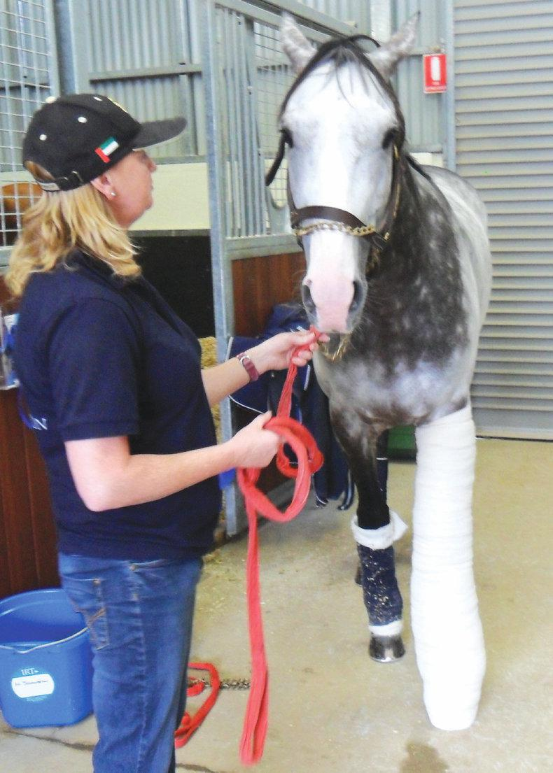 HANDS ON: Emergency first aid for horses