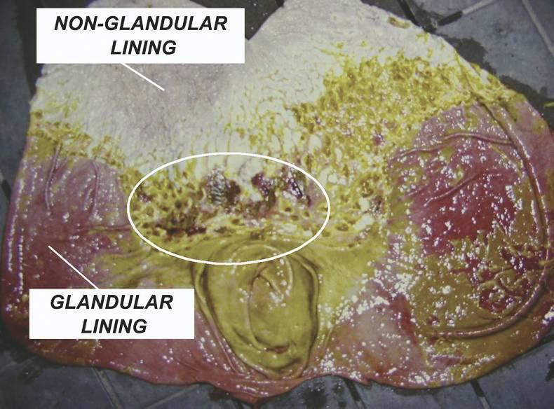 HANDS ON:  Gastric ulcers in horses