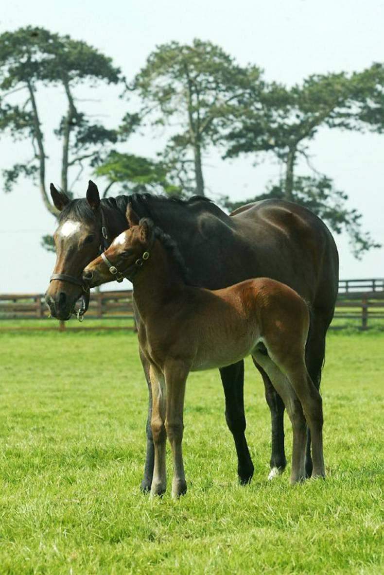 Managing nutrition in foals