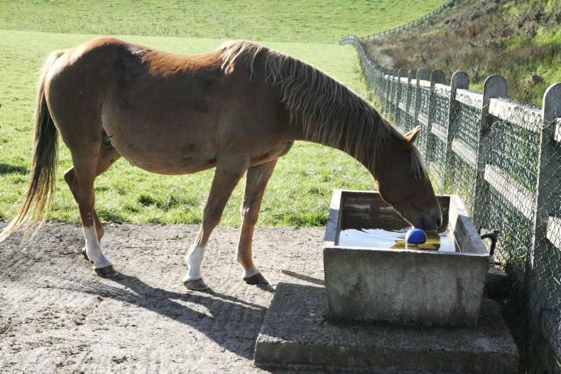 HANDS ON: Induction of foaling