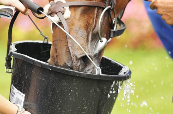HANDS ON: Dehydration dangers in performance horses