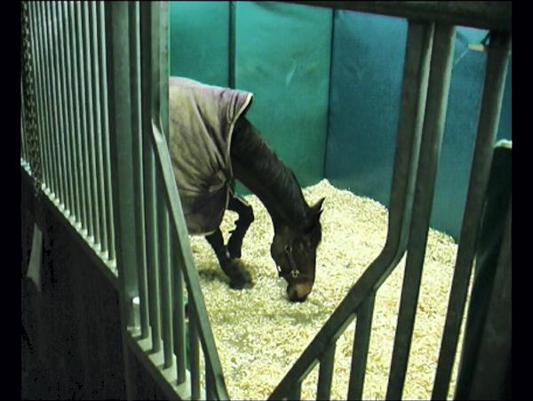 Hands On: Equine Narcolepsy