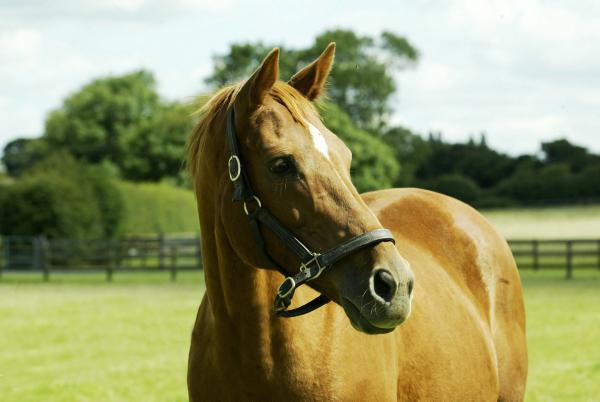 Hands On: Dental care proves to be an important factor for horse health