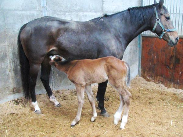 Hands On: Foaling frequently asked questions