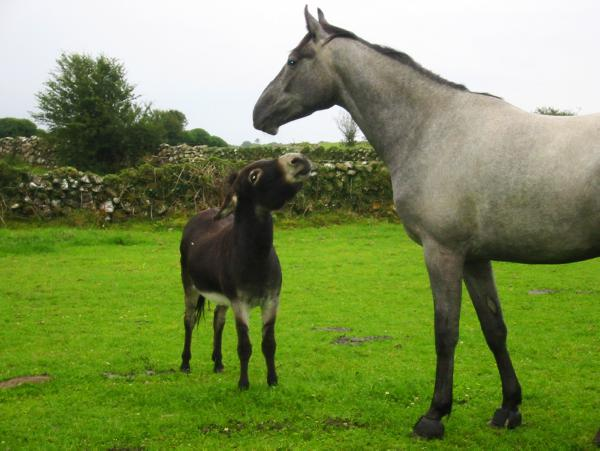 Hands On: Lungworms in horses and donkeys