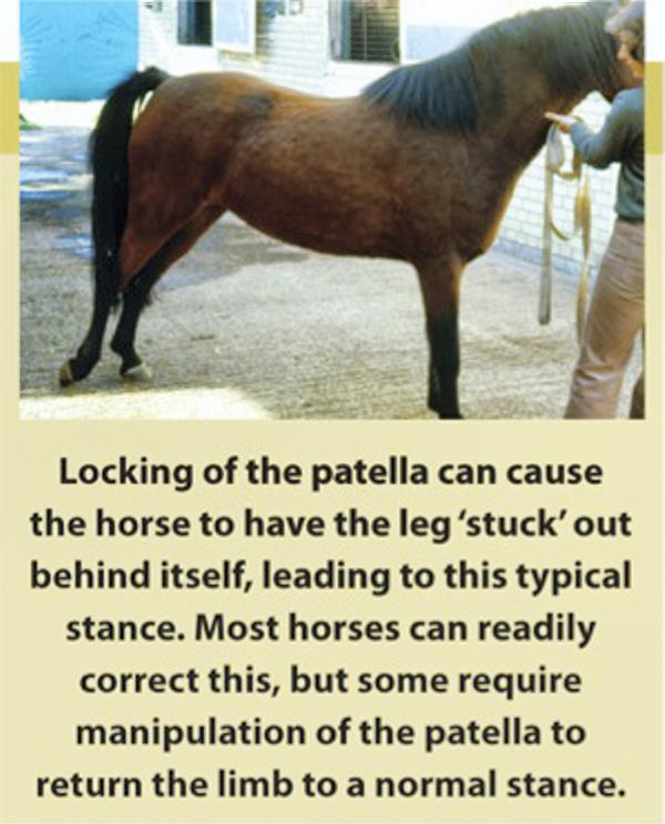 Hands On: Locked patella in horse